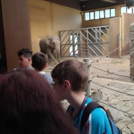 Návštěva zoo